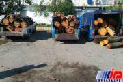 تیغ قاچاقچیان چوب در جنگل های مازندران تیزتر شد