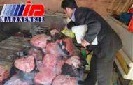 توقيف 2 تن گوشت فاسد در اردبیل