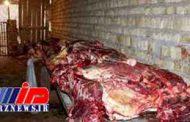 کشف لاشه الاغ ذبح شده در منزل یک کبابی