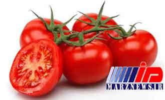 توقف صادرات گوجه ابلاغ شده است