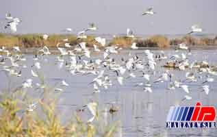 مَحمیه ها قتلگاه پرندگان مهاجر خوزستان