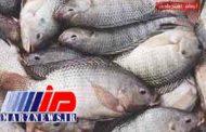تولید تیلاپیا، توجیهی برای واردات است