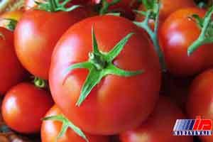 گوجه فرنگی قاچاق به مقصد نرسید