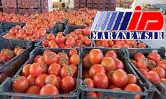 کشف ۳۱ تن گوجهفرنگی قاچاق در آذربایجانغربی
