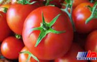 هشت دستگاه تریلی رب گوجه قاچاق در سیستان توقیف شد