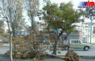 تندباد حدود ۹۰۰ میلیون تومان خسارت برجا گذاشت