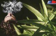 مصرف «گل» در جوانان افزایش یافته است
