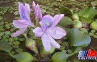 خرید، فروش و حتی پرورش این گل زیبا ممنوع شد!