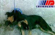 داستان اعدام یک سگ