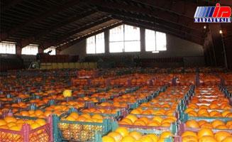 پوسیده شدن پرتقال مازندران پشت وعده و وعید صادرات
