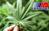 ماریجوآنا علائم آسم را تشدید میکند
