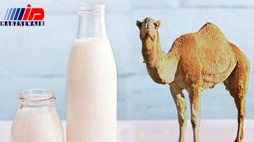 تولید شیرخشک شتر برای اولین بار در خراسان جنوبی