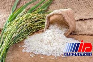 برنج مازندران پس از ۴۰ سال به اروپا صادر شد