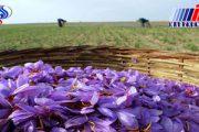 تحریم ها بازار صادرات زعفران ایران را رونق داد