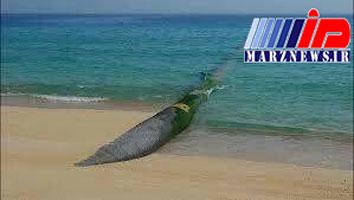 آب دریای عمان به مشهد مقدس میرسد؟