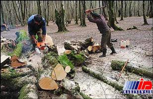سمفونی ناکوک اره موتوریها در جنگل/ توسکا و راش در خطر