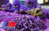 تولید زعفران افغانستان رکورد زد