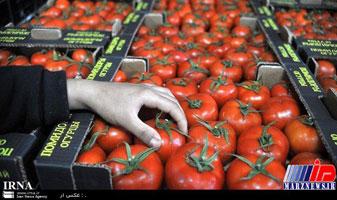 مجوز صادرات ۱۵درصد گوجه فرنگی بزودی ابلاغ می شود