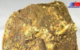 ۵۰۰ کیلوگرم سنگ طلای قاچاق در ورزقان کشف شد