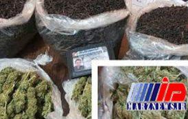 کشف «ماریجوانا» در بستههای چای
