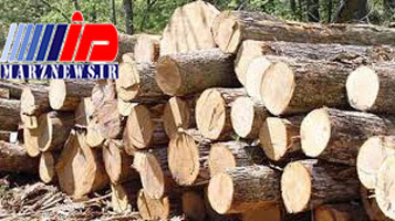 خروج چوب از آذربایجان شرقی ممنوع شد