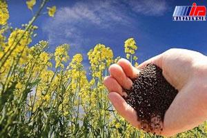 دانه ای سیاه با بهره ای طلایی