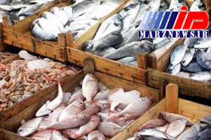 فروش گوشت کوسه و گربه ماهی در خراسان رضوی!