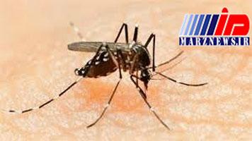 همزیستی خطرناک پشهها و حاشیهنشینان چابهار