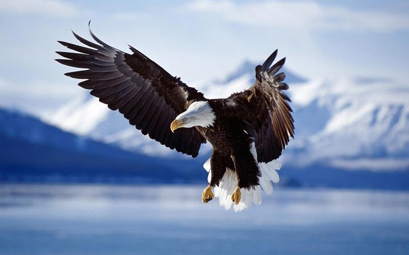 عقاب، پهباد محیط زیست خلخال را شکار کرد