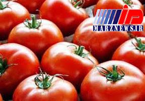 صادرات و سیل گوجه فرنگی را گران کرد