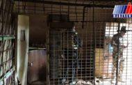 بازداشت ۵ زن داعشی در موصل