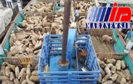گرانی گوشت ارتباطی به قاچاق دام ندارد