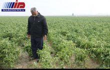 سیلاب ۸۸۰ میلیارد ریال به کشاورزان خراسان رضوی خسارت زد
