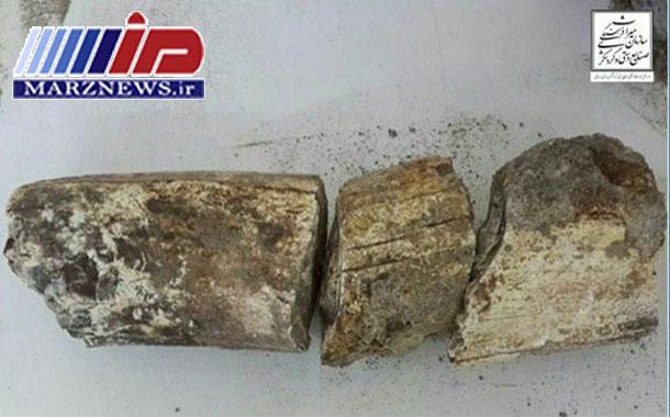 ثبت ملی سنگواره های فسیل ماموت کشف شده در شهرستان بیله سوار