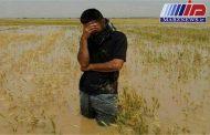 سیل به ۹۶۰۰ هکتار کشتزار و باغ خراسان شمالی آسیب رساند