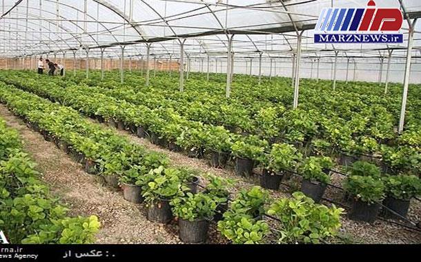 ۹۵ گلخانه در بوشهر بهره برداری شد