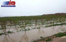 زیان های سیل به بخش کشاورزی خراسان جنوبی