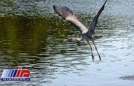 باران پای پرندگان مهاجر را به تالاب آق قشلاق بجنورد باز کرد