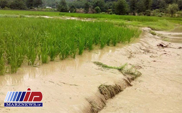 تاکید استانداری مازندران بر برگشت سریع کشاورزی سیلزده به تولید