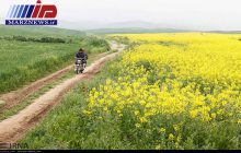 رونق تولید در مرز ارس