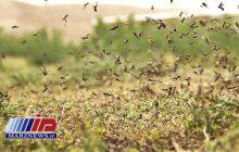 ۱۹هزار هکتار زمین کشاورزی هرمزگان علیه ملخ صحرایی سمپاشی شد