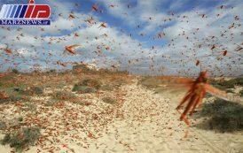 خراسان جنوبی برای مقابله با ملخ های صحرایی آماده است