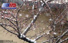 برف آذربایجان شرقی را سفیدپوش کرد