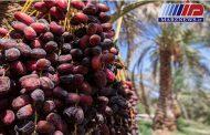 ممنوعیت صادرات خرما، بازارجهانی را به عربستان می دهد