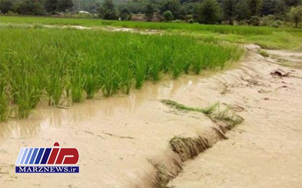 خسارت سیل به ۲۴۵ هزار هکتار از اراضی خوزستان