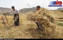 خرید گندم در سیستان و بلوچستان از مرز ۱۵۰۰۰ تن گذشت