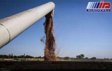خرید گندم به نرخ تضمینی در خوزستان از یک میلیون تن فراتر رفت