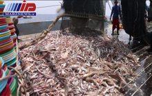 لغو مجوز صیادی ۱۶ کشتی ترال ماهگیری چینی