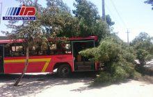 برخورد اتوبوس با درخت یک مصدوم به جا گذاشت