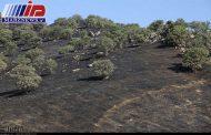 ۱۴ هکتار از مراتع و مزارع ایلام در آتش سوخت